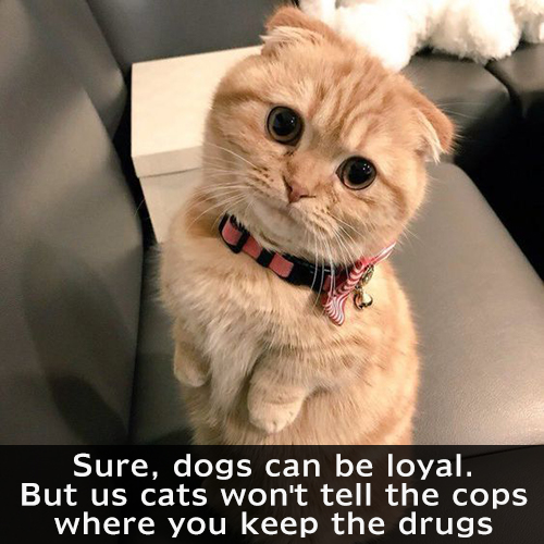 Sure, dogs can be loyal, but us cats won't tell the cops where you keep the drugs